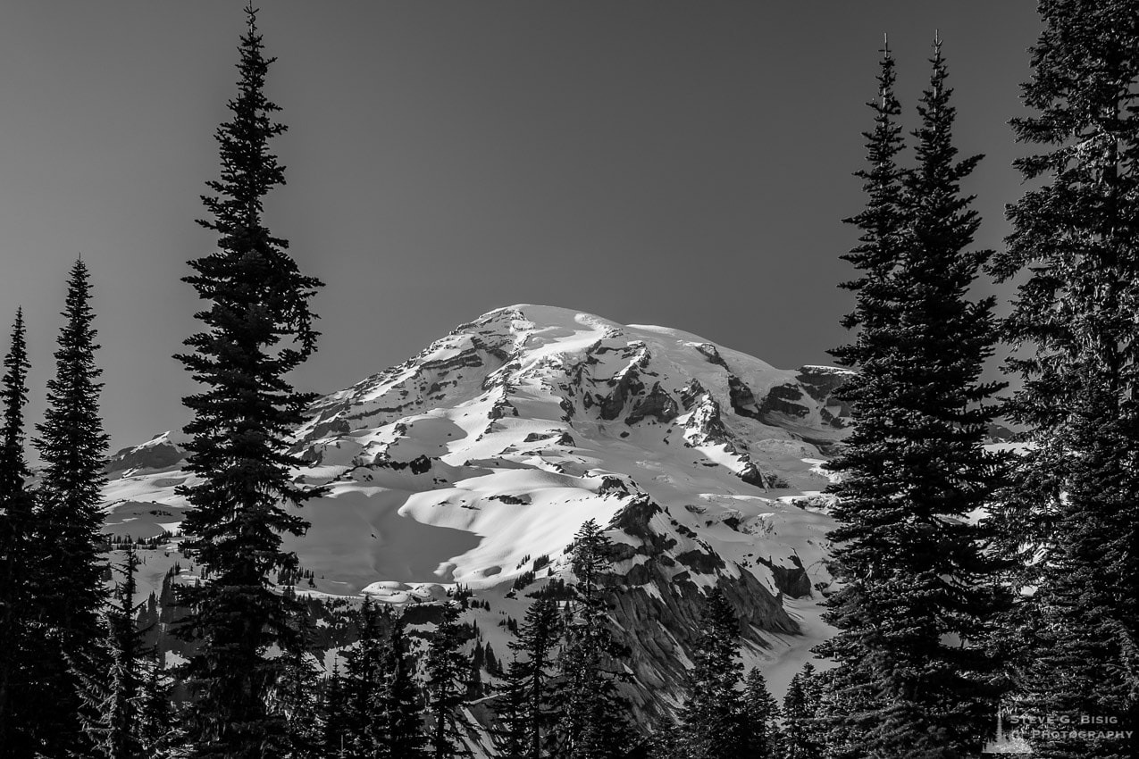 Through the Forest, Mount Rainier, Washington, 2016