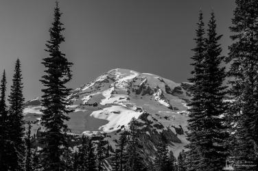A black and white landscape photograph of Mount Rainier on a sunny Spring evening as seen through the open forest along the Nisqually Vista Trail in the Paradise area of Mount Rainier National Park, Washington.