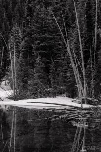 A black and white photograph of a snow covered Spring forest at Lower Crystal Lake in the Mount Rainier National Park, Washington.