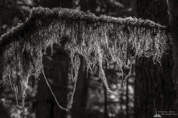 "A black and white nature photograph from a project titled ""Highlights of the Forest"" captured at the Federation Forest State Park near Greenwater, Washington."