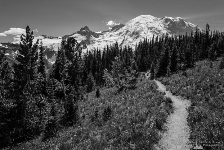 A black and white landcape photograph of Mount Rainier as viewed from the Silver Forest Trail in the Sunrise area of Mount Rainier National Park, Washington.
