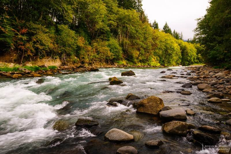 A landscape photograph of the Cispus River along Forest Road 25 in the Gifford Pinchot National Forest near Randle, Washington.