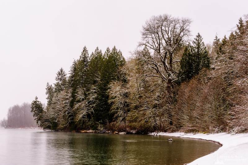 A landscape photograph of forest along the banks of the Skagit River after a late autumn snowfall at Rasar State Park, in Skagit County near Hamilton, Washington.