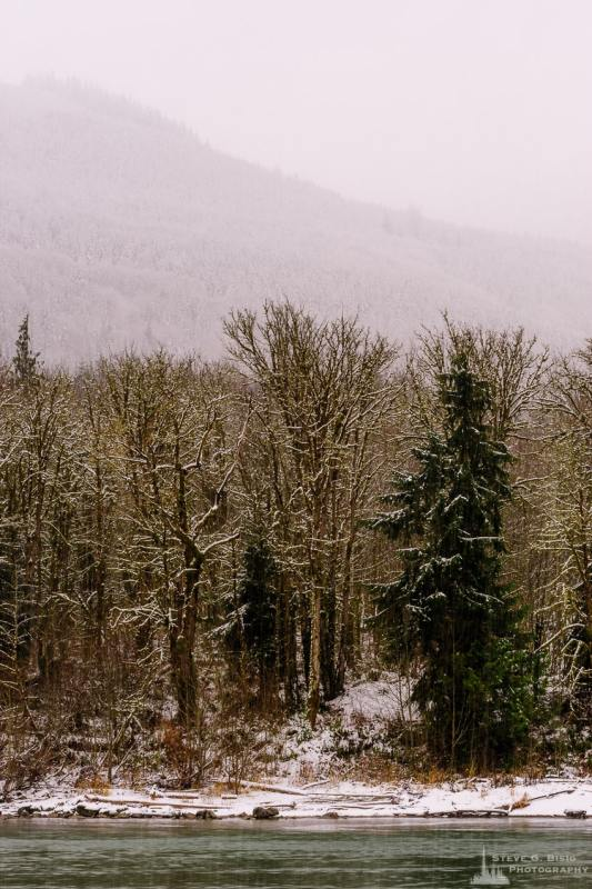 A landscape photograph of forest along the south bank of the Skagit River after a late autumn snowfall at Rasar State Park, in Skagit County near Hamilton, Washington.