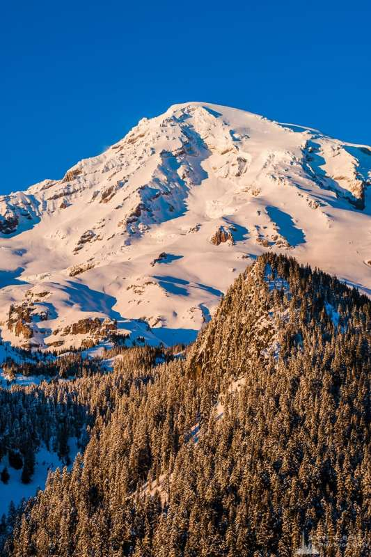 A landscape photograph of the sunlight shining on a snow covered Mount Rainier on an early winter evening as captured along the Paradise Road at Mount Rainier National Park, Washington.