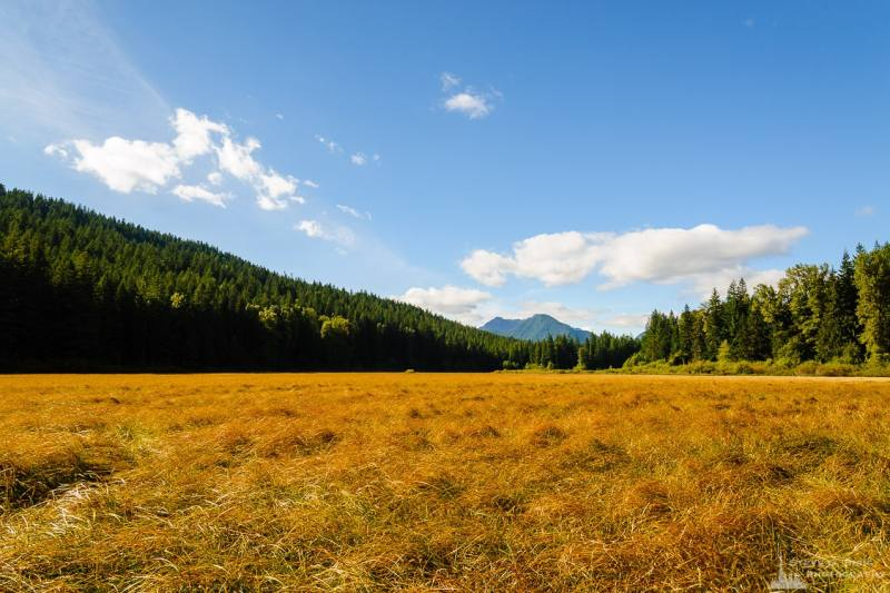 A landscape photograph of Bear Prairie along Forest Road 52 (Skate Creek Road) in the Gifford Pinchot National Forest in Lewis County, Washington.