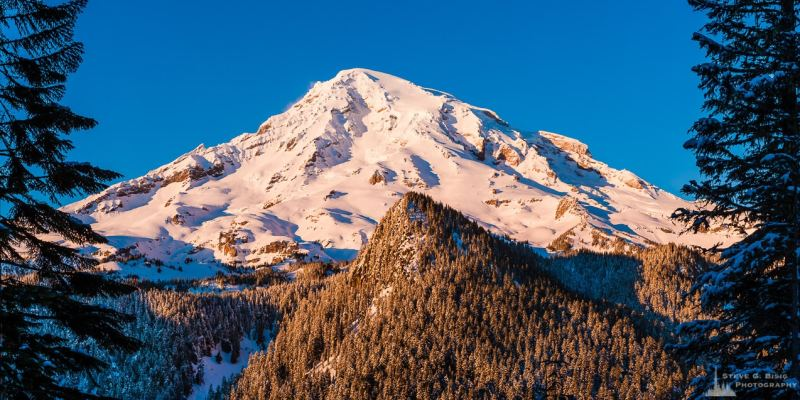 A panoramic landscape photograph of the sunlight shining on the southern face of a snow covered Mount Rainier, framed by trees,  on an early winter evening, captured along the Paradise Road at Mount Rainier National Park, Washington.