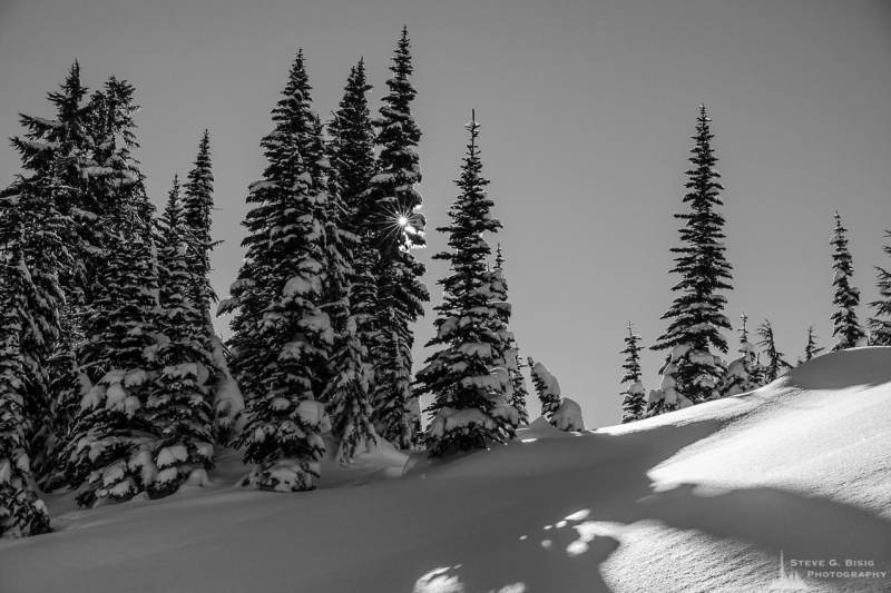 A black and white landscape photograph of a sunburst shining through the trees as captured on a sunny winter day in the Paradise area of Mount Rainier National Park, Washington.