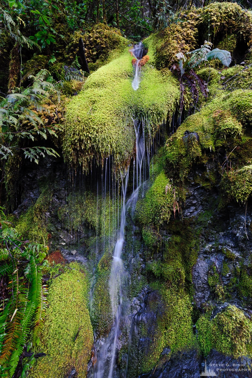 Moss Waterfall, Mason County, Washington, 2017