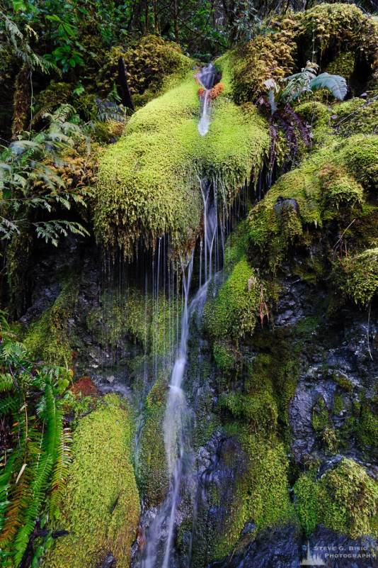 A nature photograph of a seasonal moss waterfall along FR23 in the Olympic National Forest in rural Mason County, Washington.