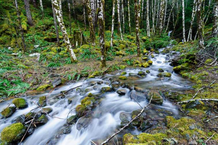 A landscape photograph of a nameless tributary of Cedar Creek along FR23 in the Olympic National Forest in rural Mason County, Washington.
