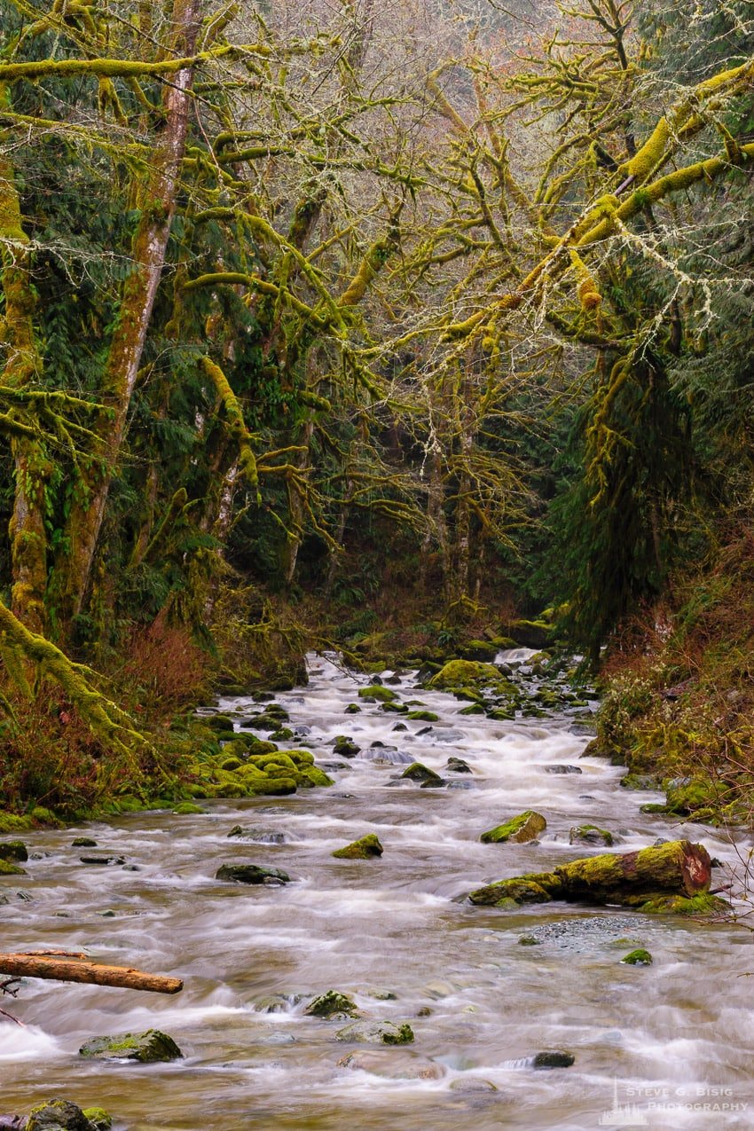 O'Toole Creek, Skagit County, Washington, 2017