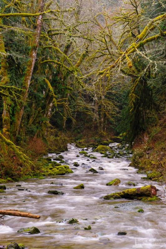 A landscape photograph of moss covered tree branches overhanging O'Toole Creek in Skagit County, Washington.