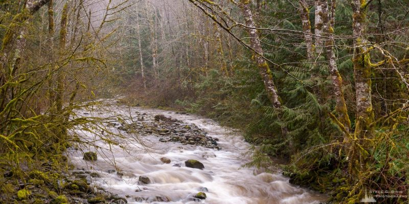 A panoramic landscape photograph of a rainy winter day along Cumberland Creek in Skagit County, Washington.