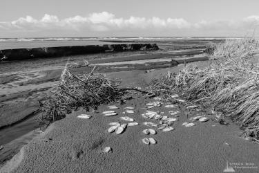 A black and white landscape photograph of a creek flowing into the Pacific Ocean at low tide along South Beach in Grays Harbor County near Grayland, Washington.