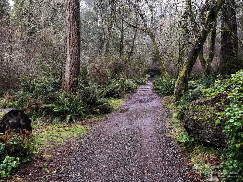 A mobile landscape photograph of a hiking trail through the forest on a rainy winter day at Point Defiance Park in Tacoma, Washington.