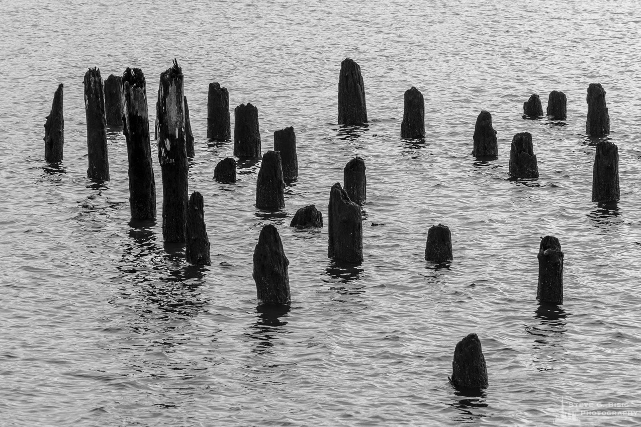 Pilings, Hoquiam, Washington, Winter 2017