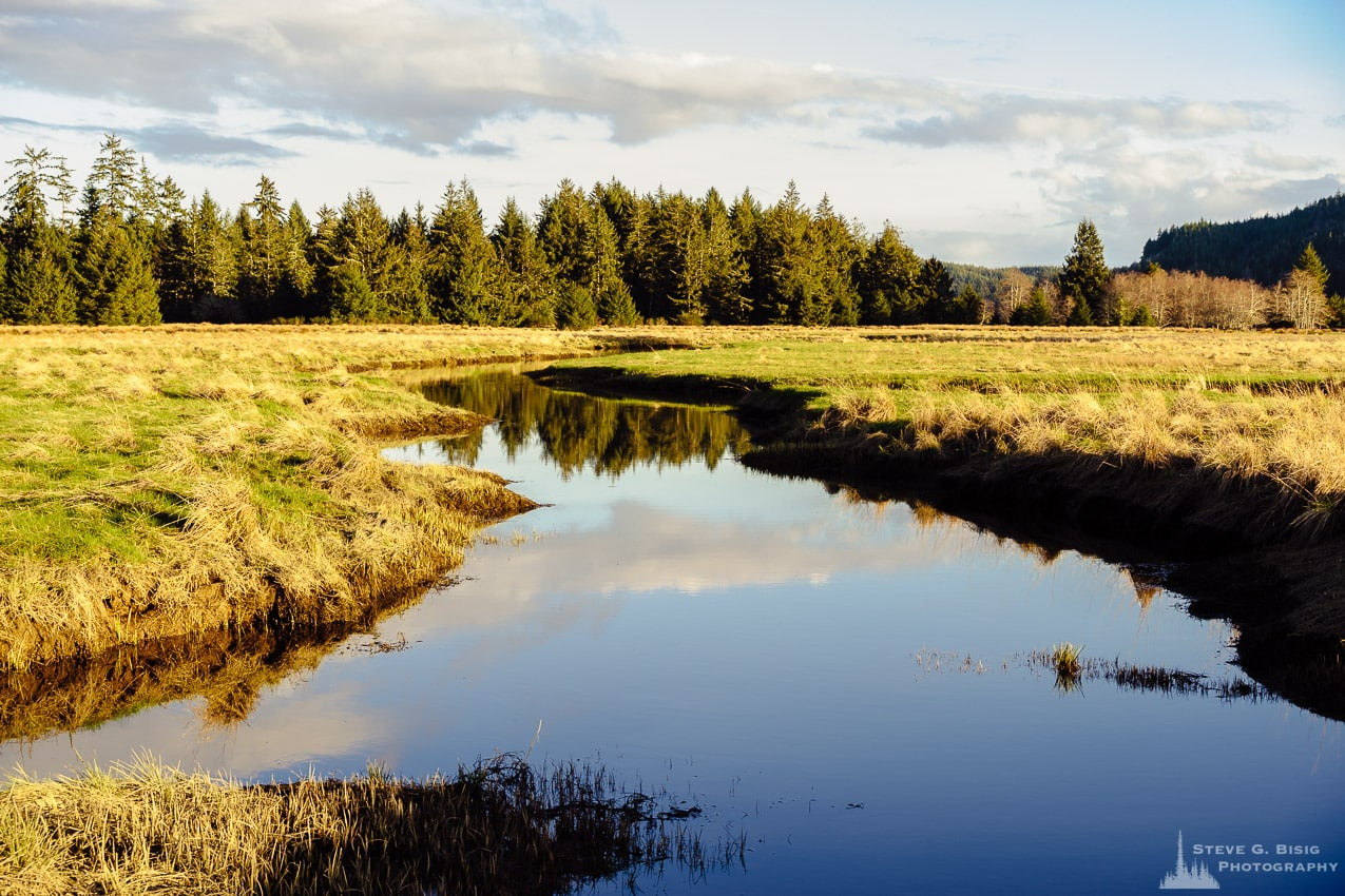 Slough, Government Road, Pacific County, Washington, Winter 2017