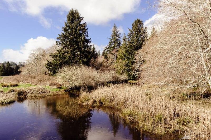 A landscape photograph of an unknown name tributary of the Cedar River in rural Pacific County, Washington.