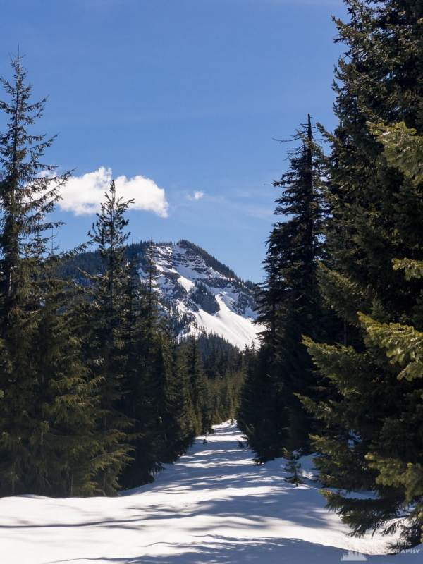 A mobile landscape photograph of Hogback Ridge under a blanket of early spring snow as viewed from Gifford Pinchot National Forest Road 1284 in Lewis County near White Pass, Washington.