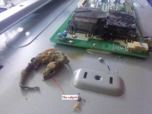 Dead Gecko, Steve hill TV services