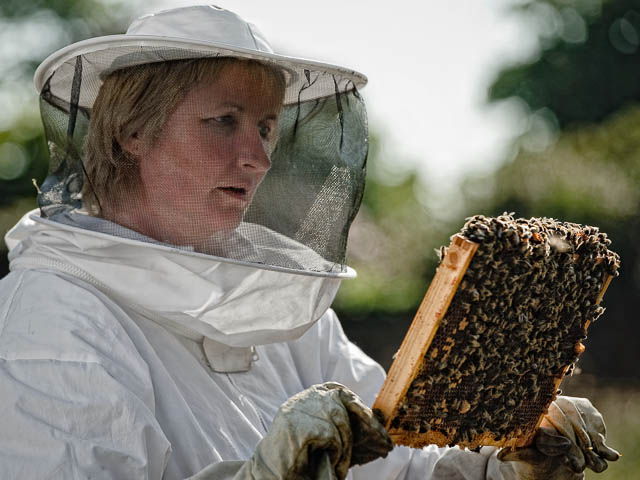 Female Beekeeper Inspecting Latest Batch Of Honey