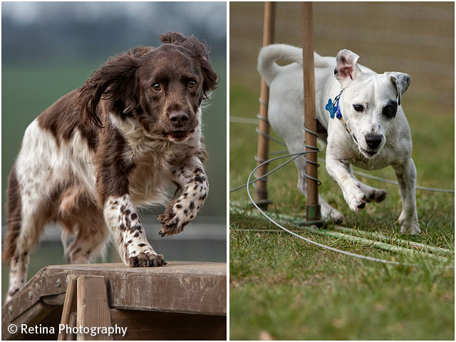 Dog Agility Beam And Weaves