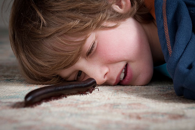 Weekend Passions Editorial Giant Millipede Crawling Towards Young Boy
