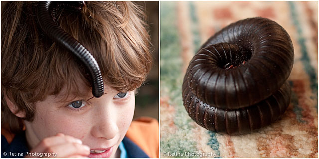Giant Millipede On Young Boys Head And Warming Up