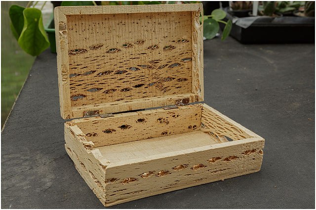 Box Made From Cactus Plant Flesh