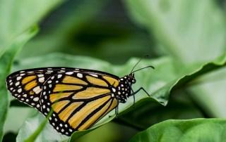 papillon insectarium montreal