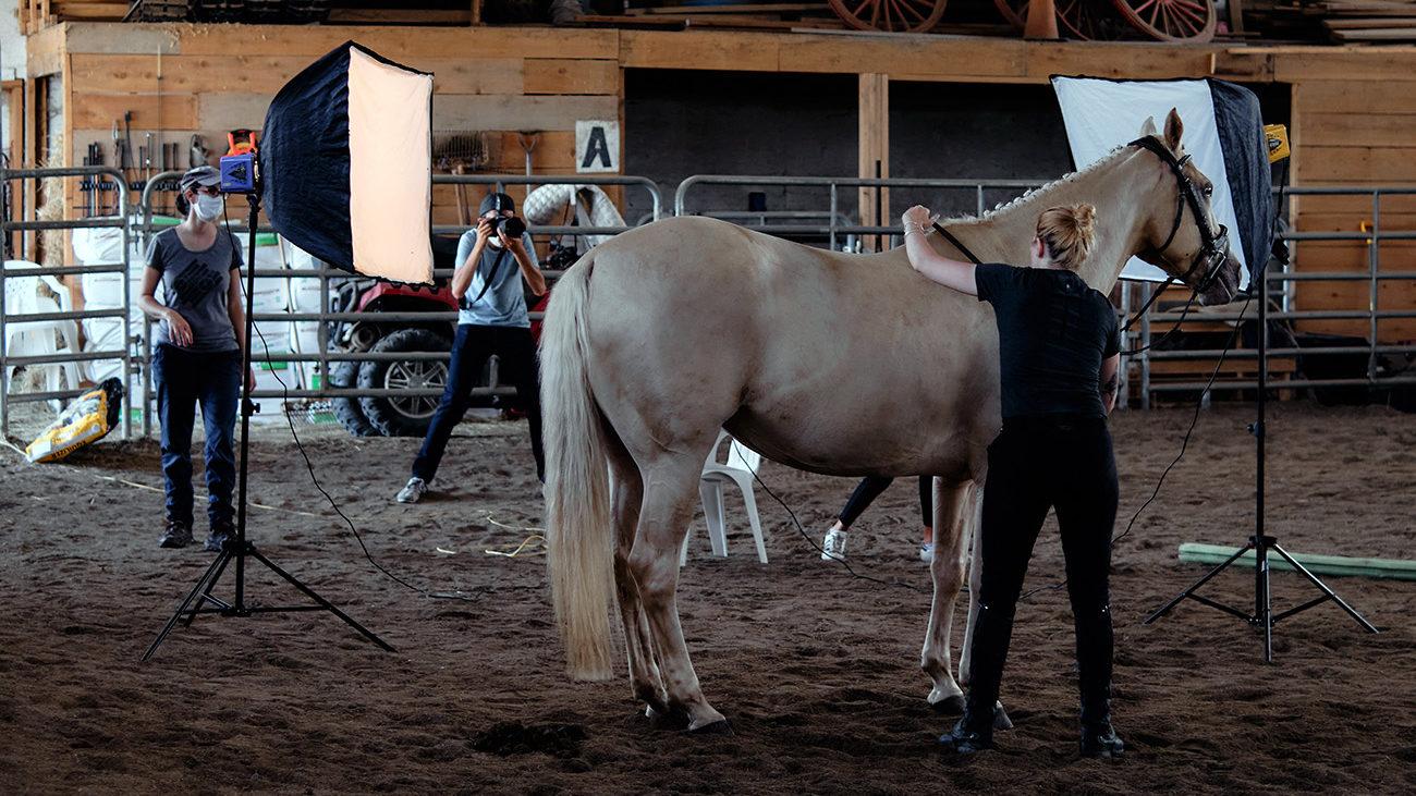 bts photoshoot cheval montreal