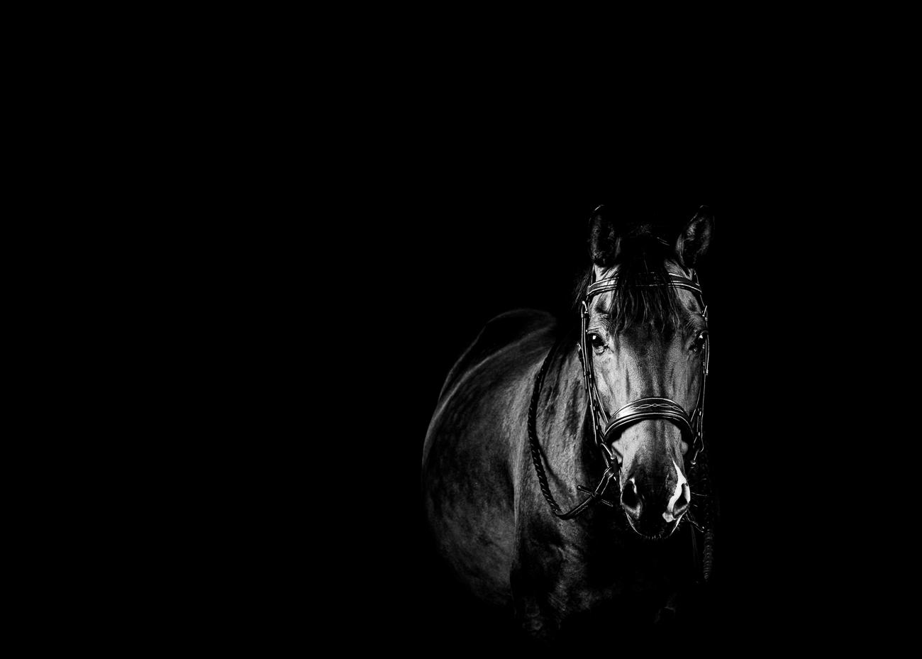 prestigio equestrian photo cheval noir et blanc