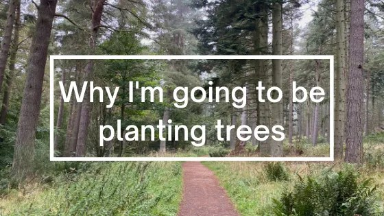 Why I'm going to be planting trees   Steve Bonthrone Personal Coach Blog