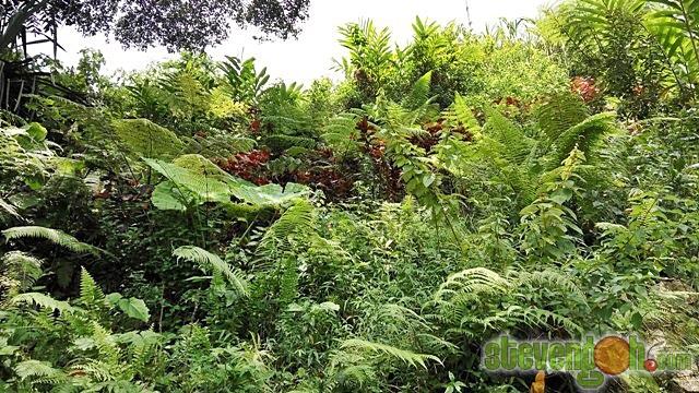 the_habitat_penang_hill11