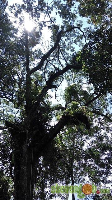 the_habitat_penang_hill9