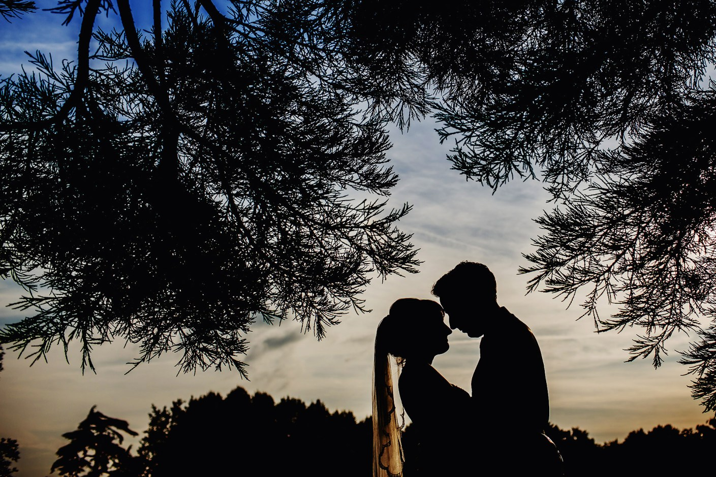 silhouette in the trees