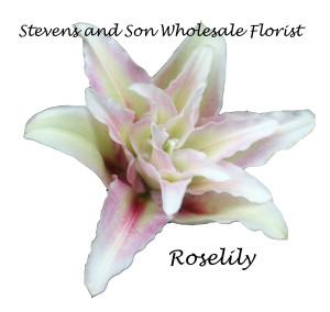 Oriental Lilies Stevens And Son Wholesale Florist