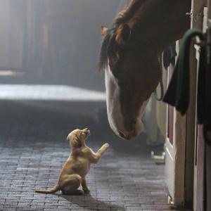 Budweiser Puppy Love Ad