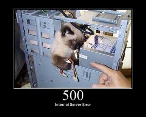 500 Kitty Error