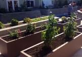 Garden outside SHAG in Federal Way