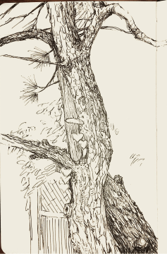 The tree in Loris back yard