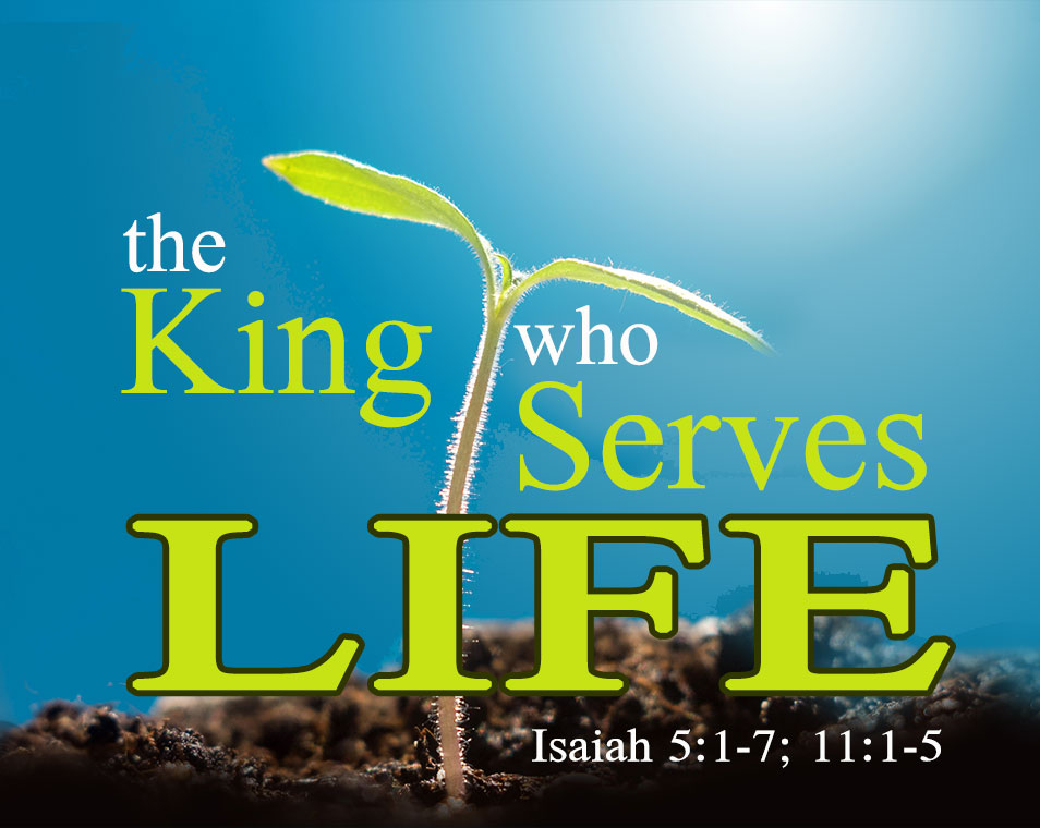The King Who Serves Life | A Sermon on Isaiah 5:1-7; 11:1-5