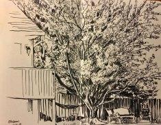 summer2018-sketch-15