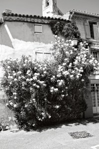 Flowers growing in the village, Lourmarin, France.