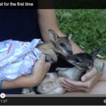 Two foster joeys meet for the first time [Video]