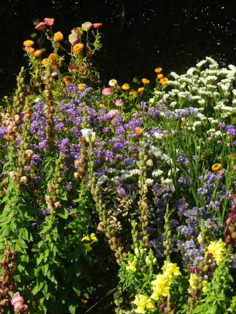 Stewart Innes flowers