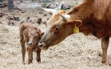Florida Agricultural Museum farm animals