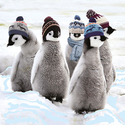 Penguins With Hats St Giles Hospice