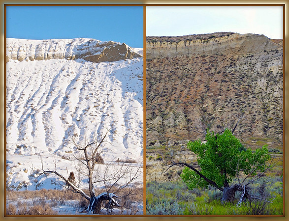 In both photos I used the tree for foreground interest against the high butte in the background. The stark difference shows how tough life can be over the course of a few months.